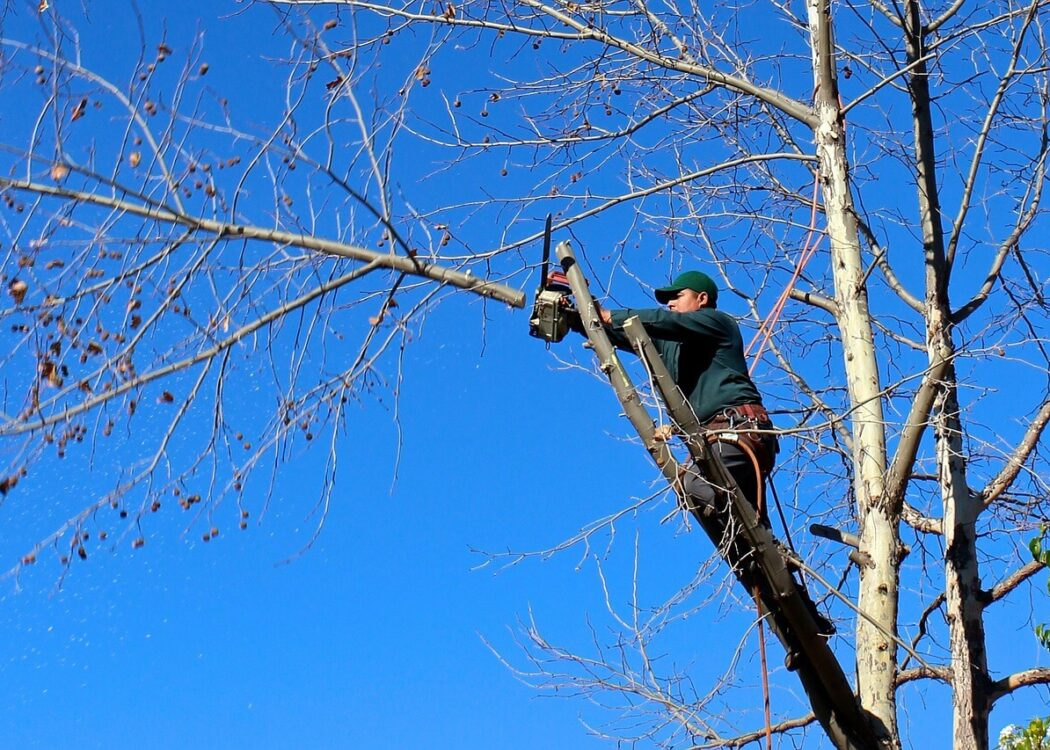 Contact Us-Lauderhill FL Tree Trimming and Stump Grinding Services-We Offer Tree Trimming Services, Tree Removal, Tree Pruning, Tree Cutting, Residential and Commercial Tree Trimming Services, Storm Damage, Emergency Tree Removal, Land Clearing, Tree Companies, Tree Care Service, Stump Grinding, and we're the Best Tree Trimming Company Near You Guaranteed!