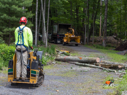 Emergency Tree Removal-Lauderhill FL Tree Trimming and Stump Grinding Services-We Offer Tree Trimming Services, Tree Removal, Tree Pruning, Tree Cutting, Residential and Commercial Tree Trimming Services, Storm Damage, Emergency Tree Removal, Land Clearing, Tree Companies, Tree Care Service, Stump Grinding, and we're the Best Tree Trimming Company Near You Guaranteed!