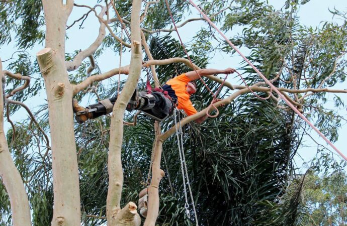 Lauderhill FL Tree Trimming and Stump Grinding Services Home Page Image-We Offer Tree Trimming Services, Tree Removal, Tree Pruning, Tree Cutting, Residential and Commercial Tree Trimming Services, Storm Damage, Emergency Tree Removal, Land Clearing, Tree Companies, Tree Care Service, Stump Grinding, and we're the Best Tree Trimming Company Near You Guaranteed!