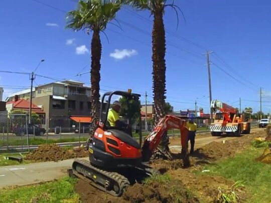 Palm Tree Removal-Lauderhill FL Tree Trimming and Stump Grinding Services-We Offer Tree Trimming Services, Tree Removal, Tree Pruning, Tree Cutting, Residential and Commercial Tree Trimming Services, Storm Damage, Emergency Tree Removal, Land Clearing, Tree Companies, Tree Care Service, Stump Grinding, and we're the Best Tree Trimming Company Near You Guaranteed!