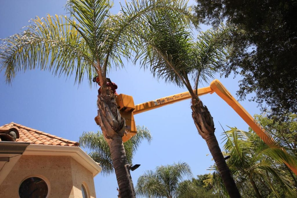 Palm Tree Trimming-Lauderhill FL Tree Trimming and Stump Grinding Services-We Offer Tree Trimming Services, Tree Removal, Tree Pruning, Tree Cutting, Residential and Commercial Tree Trimming Services, Storm Damage, Emergency Tree Removal, Land Clearing, Tree Companies, Tree Care Service, Stump Grinding, and we're the Best Tree Trimming Company Near You Guaranteed!