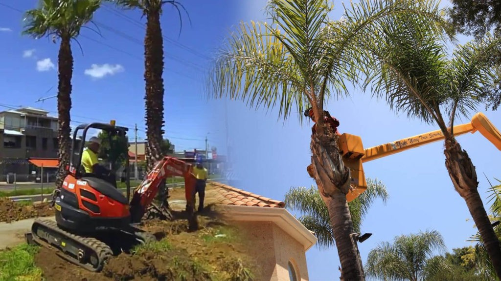 Palm tree trimming & palm tree removal-Lauderhill FL Tree Trimming and Stump Grinding Services-We Offer Tree Trimming Services, Tree Removal, Tree Pruning, Tree Cutting, Residential and Commercial Tree Trimming Services, Storm Damage, Emergency Tree Removal, Land Clearing, Tree Companies, Tree Care Service, Stump Grinding, and we're the Best Tree Trimming Company Near You Guaranteed!