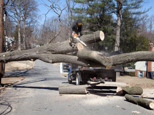 Residential Tree Services-Lauderhill FL Tree Trimming and Stump Grinding Services-We Offer Tree Trimming Services, Tree Removal, Tree Pruning, Tree Cutting, Residential and Commercial Tree Trimming Services, Storm Damage, Emergency Tree Removal, Land Clearing, Tree Companies, Tree Care Service, Stump Grinding, and we're the Best Tree Trimming Company Near You Guaranteed!