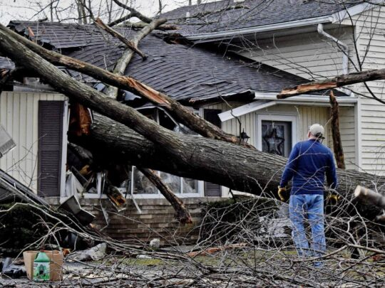 Storm Damage-Lauderhill FL Tree Trimming and Stump Grinding Services-We Offer Tree Trimming Services, Tree Removal, Tree Pruning, Tree Cutting, Residential and Commercial Tree Trimming Services, Storm Damage, Emergency Tree Removal, Land Clearing, Tree Companies, Tree Care Service, Stump Grinding, and we're the Best Tree Trimming Company Near You Guaranteed!