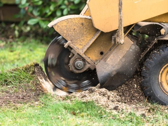 Stump Grinding-Lauderhill FL Tree Trimming and Stump Grinding Services-We Offer Tree Trimming Services, Tree Removal, Tree Pruning, Tree Cutting, Residential and Commercial Tree Trimming Services, Storm Damage, Emergency Tree Removal, Land Clearing, Tree Companies, Tree Care Service, Stump Grinding, and we're the Best Tree Trimming Company Near You Guaranteed!