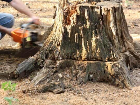 Stump Removal-Lauderhill FL Tree Trimming and Stump Grinding Services-We Offer Tree Trimming Services, Tree Removal, Tree Pruning, Tree Cutting, Residential and Commercial Tree Trimming Services, Storm Damage, Emergency Tree Removal, Land Clearing, Tree Companies, Tree Care Service, Stump Grinding, and we're the Best Tree Trimming Company Near You Guaranteed!