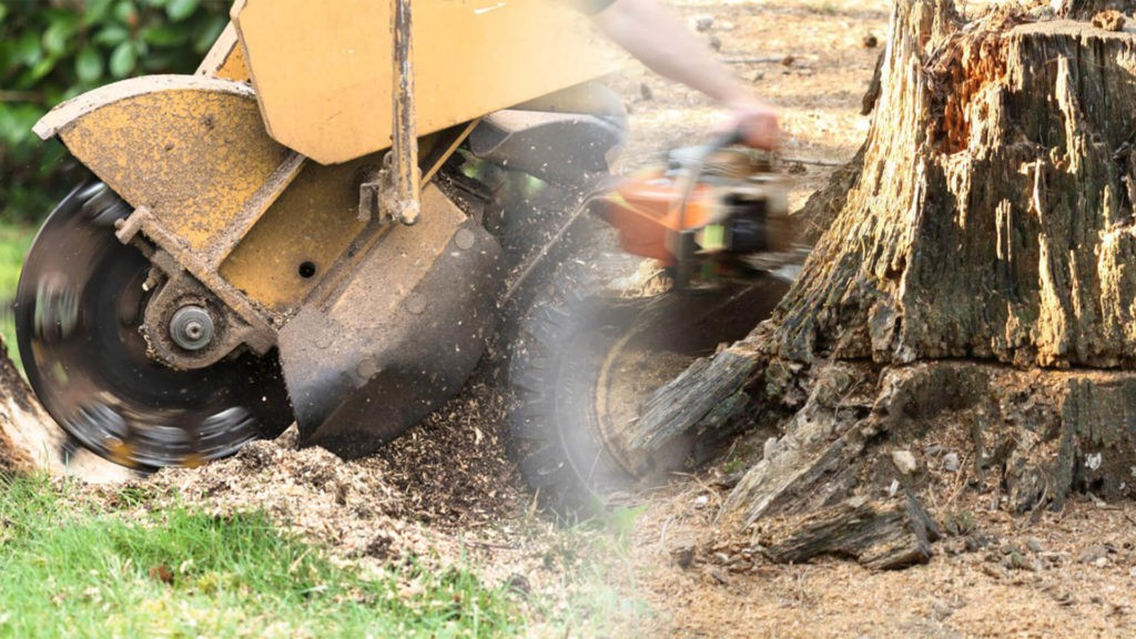 Stump grinding & removal-Lauderhill FL Tree Trimming and Stump Grinding Services-We Offer Tree Trimming Services, Tree Removal, Tree Pruning, Tree Cutting, Residential and Commercial Tree Trimming Services, Storm Damage, Emergency Tree Removal, Land Clearing, Tree Companies, Tree Care Service, Stump Grinding, and we're the Best Tree Trimming Company Near You Guaranteed!