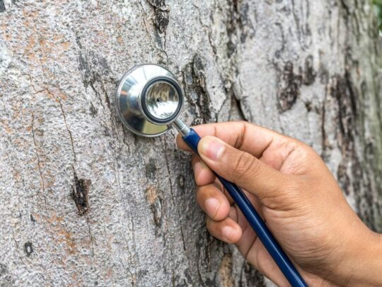 Tree Assessments-Lauderhill FL Tree Trimming and Stump Grinding Services-We Offer Tree Trimming Services, Tree Removal, Tree Pruning, Tree Cutting, Residential and Commercial Tree Trimming Services, Storm Damage, Emergency Tree Removal, Land Clearing, Tree Companies, Tree Care Service, Stump Grinding, and we're the Best Tree Trimming Company Near You Guaranteed!