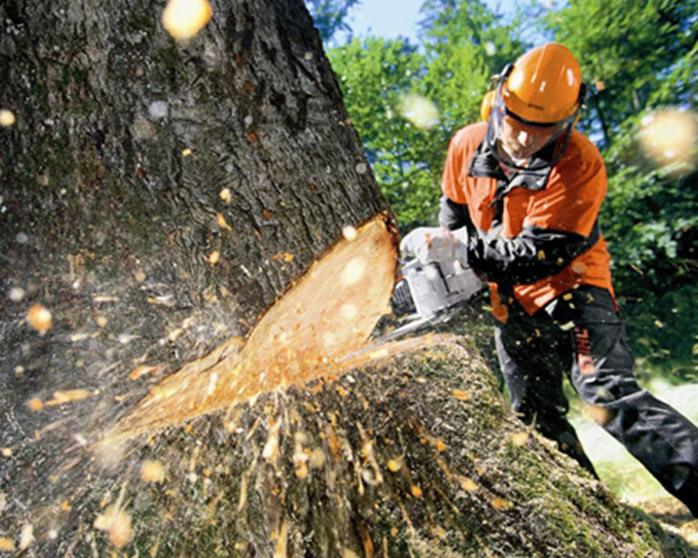 Tree Cutting-Lauderhill FL Tree Trimming and Stump Grinding Services-We Offer Tree Trimming Services, Tree Removal, Tree Pruning, Tree Cutting, Residential and Commercial Tree Trimming Services, Storm Damage, Emergency Tree Removal, Land Clearing, Tree Companies, Tree Care Service, Stump Grinding, and we're the Best Tree Trimming Company Near You Guaranteed!