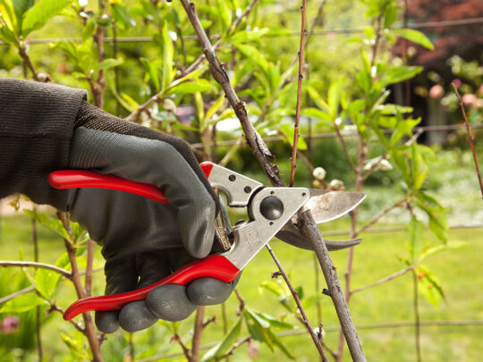 Tree Pruning-Lauderhill FL Tree Trimming and Stump Grinding Services-We Offer Tree Trimming Services, Tree Removal, Tree Pruning, Tree Cutting, Residential and Commercial Tree Trimming Services, Storm Damage, Emergency Tree Removal, Land Clearing, Tree Companies, Tree Care Service, Stump Grinding, and we're the Best Tree Trimming Company Near You Guaranteed!