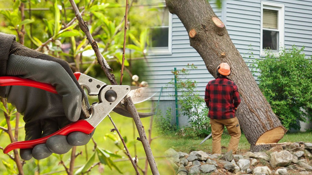 Tree pruning & tree removal-Lauderhill FL Tree Trimming and Stump Grinding Services-We Offer Tree Trimming Services, Tree Removal, Tree Pruning, Tree Cutting, Residential and Commercial Tree Trimming Services, Storm Damage, Emergency Tree Removal, Land Clearing, Tree Companies, Tree Care Service, Stump Grinding, and we're the Best Tree Trimming Company Near You Guaranteed!